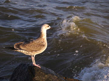 A bird standing on a rock in the midst of rushing waters №54452