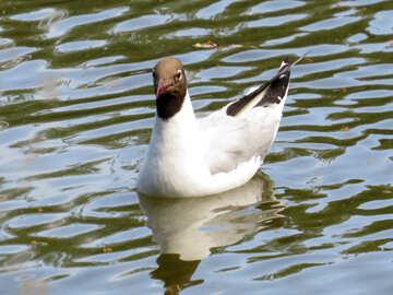 bird swimming in water №54289
