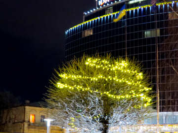 Beautiful tree with lights christmas decorated building №54122