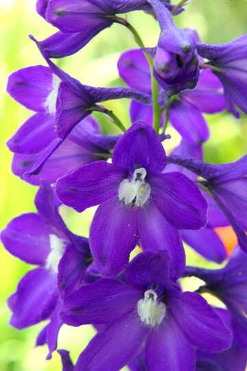 Purple flowers №54414