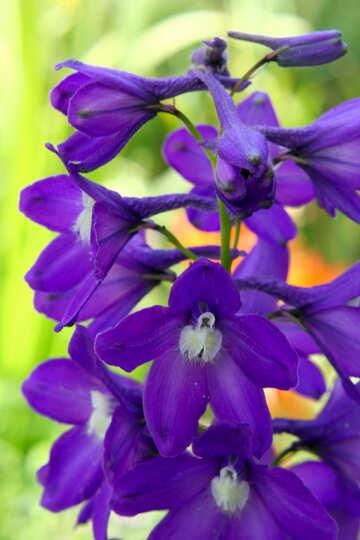 Purple flowers violet №54413