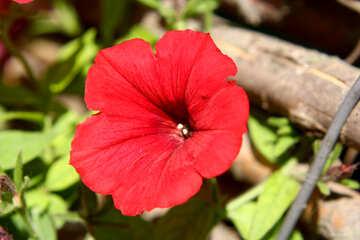 Красный цветок №54422