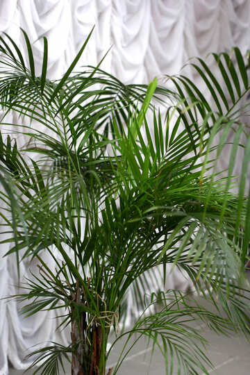 its a green plant palm Potted with fronds №54035