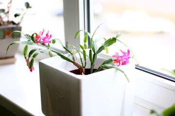 Flower pot №54633