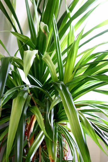 A plant with green leaves tropical Plant №54632