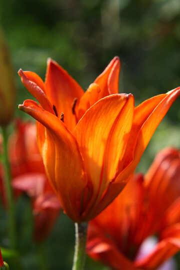 Red  flower №54405