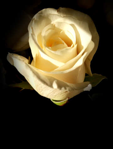 Sfondo rosa №54882