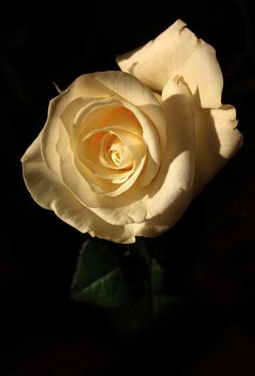 Bella foto rosa №54881