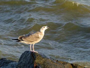 Bird animal ocean beach standing №54426