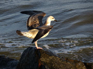 Птица поднимает крылья №54446