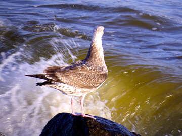 Pájaro en roca por el océano №54433