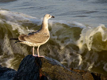 a bird on a stone at the sea №54444