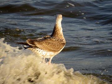 Un maravilloso pájaro animal océano agua naturaleza sin palabras №54434
