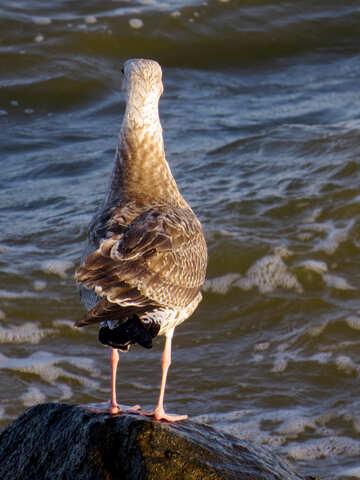 Wonderful bird seagull standing on water №54438
