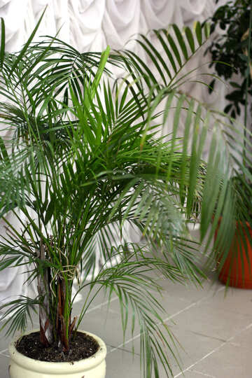 A green potted plant in top palm Nice  Nature №54034