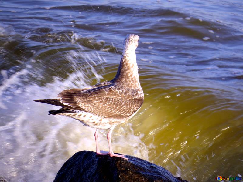 bird on rock by ocean №54433