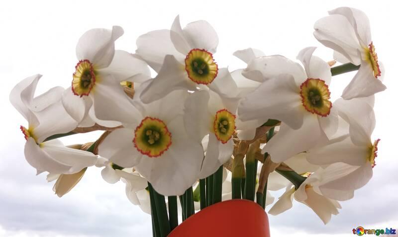 A vase of spring narcissus flowers white light petal  №56174