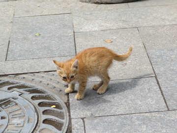 Homeless  kitten №6969