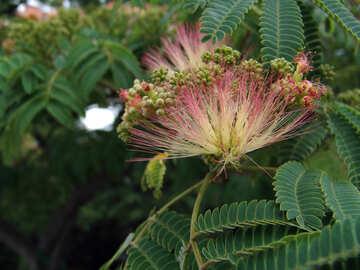 Fluffy  flower №6974