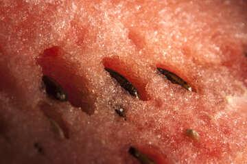 Watermelon  Bone №6055