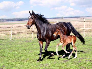 Pferd №6182