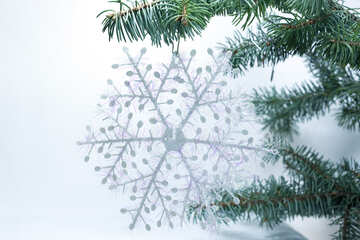 Large  snowflake  at  branch. №6794
