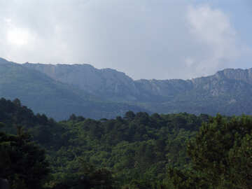 Mountain  woods. №6940