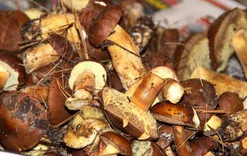 Polish  Mushrooms . heap. №6149