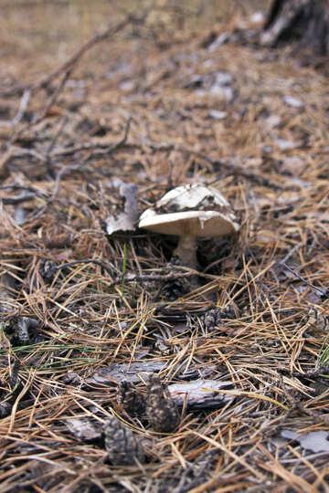 Mushroom №6146