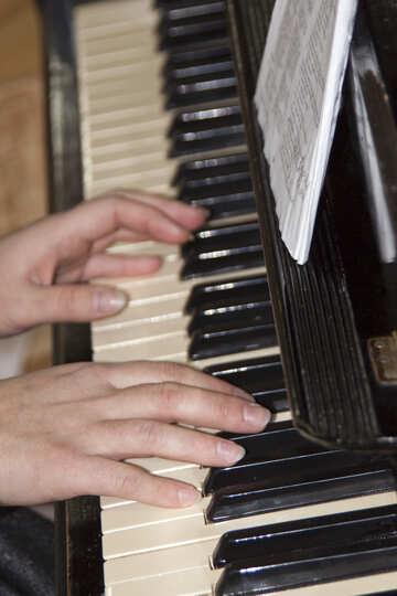 Hands  pianist №6157