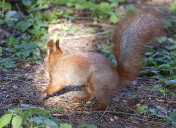 Erschrocken Eichhörnchen №6134