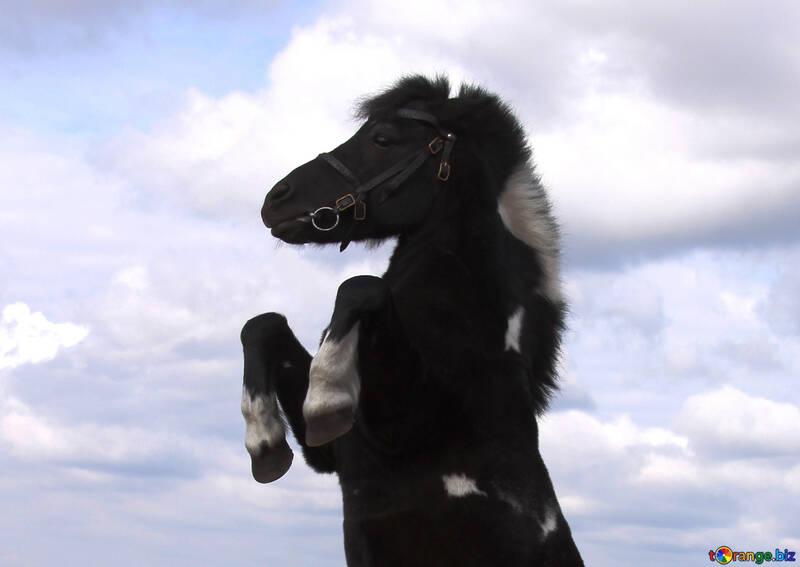 Pony №6181