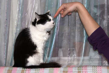 Cat  blame  watch  at  finger №7355