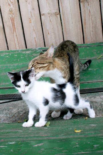 Mom  cat  and  kitten №7610