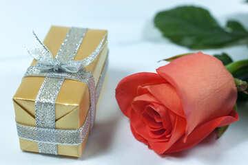 Gift  wife  №7207
