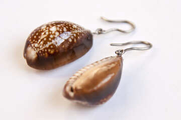 Earrings   ears  of the  seashells. №7515