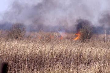 Fire   Field №7431