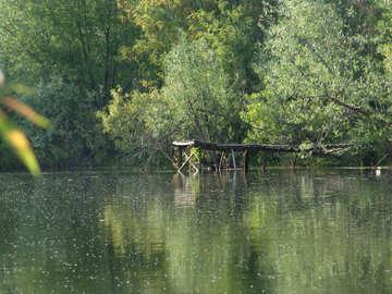 Pesca №7607