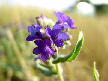 Field  Flowers №7683