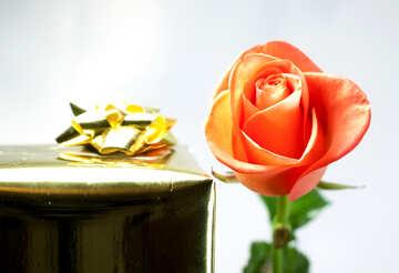 Regalo e fiore. №7170
