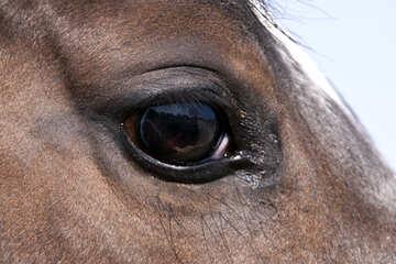 Eye  Horses №7381