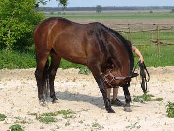 Horse  Bows №7613