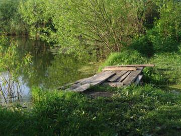 Silvicultura Lago №7422