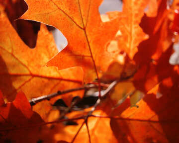 Autumn  list №7603