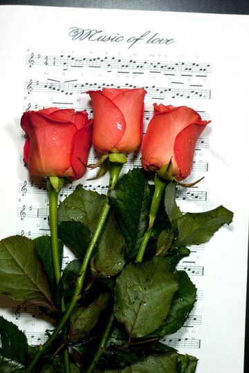Musica amore. №7133