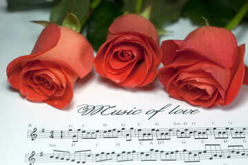 Amor música №7264