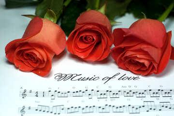 Love  Sonata №7263