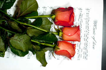 Three  Red  Roses  are  at  music notes. №7185