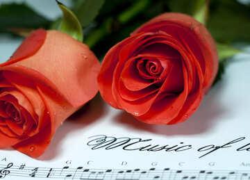 Due Rose e note №7215