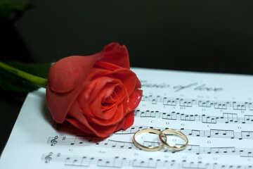 Liebe Musik. №7248